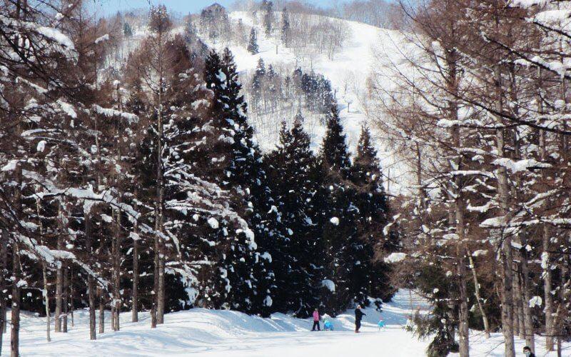 赤倉温泉スキー場 林間