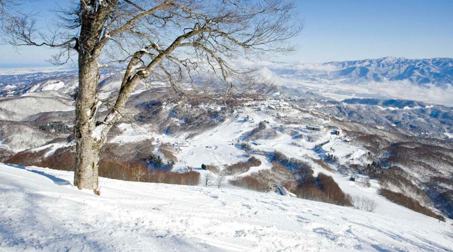 斑尾高原スキー場 絶景