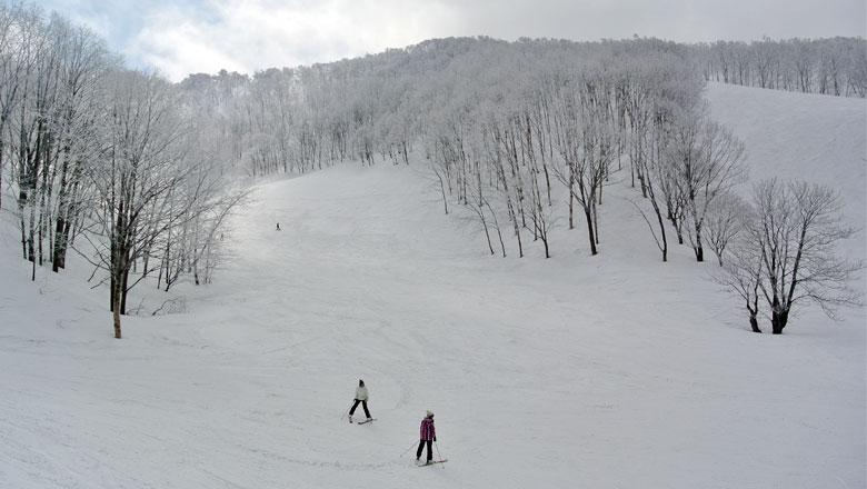 斑尾高原スキー場 ツリーライン